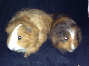 Tash & Eloise