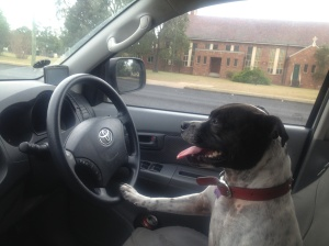 See told you I could drive!